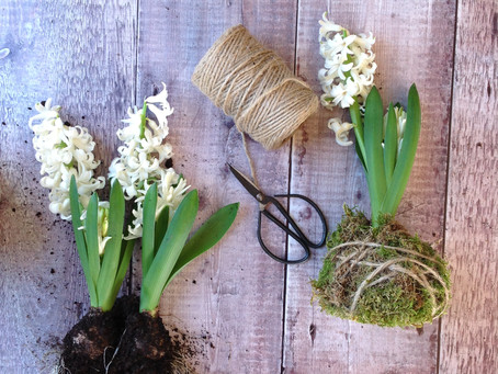 Create the Kokedama 'wow' factor with your spring flowers