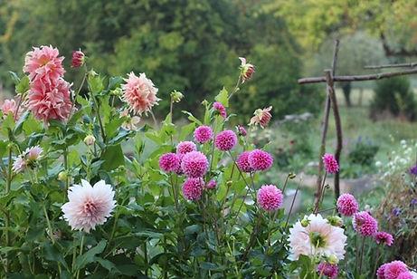 Gardening workshops Salisbury