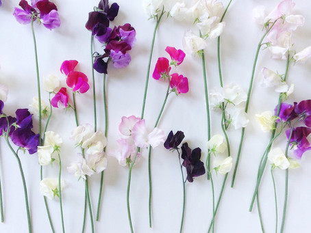 What are the most popular flowers for making perfume?