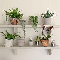 Plant Shelfie.JPG