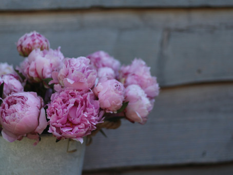 How to get peonies to open