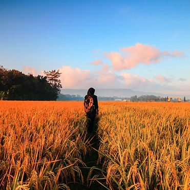 adventure-agriculture-barley-789555_edit