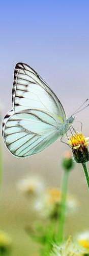 Butterfly 2_edited_edited.jpg