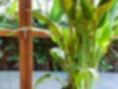 indoor planting.jpg