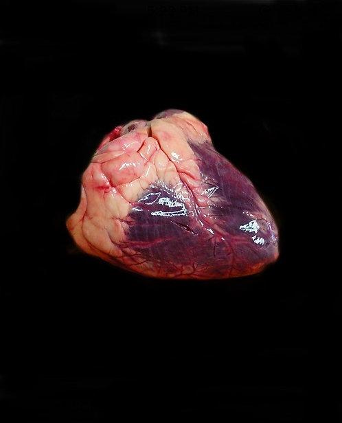 Heart / lbs