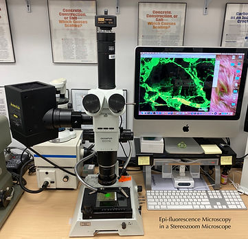 Fluorescence Microscopy in Olympus SZX12