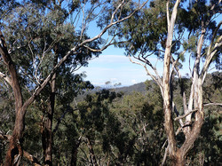 Mt Bolangum 21.5.2017 view to S, A Hughes