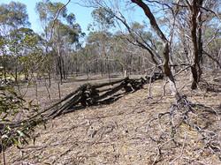 Chock and Log fence , Centre Rd Kara Kara NP- boundary of Ramsbottom and Strathfillan stations- hist