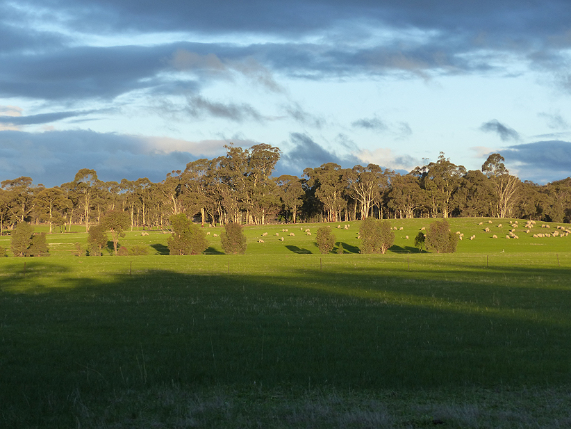 sheep may safely graze Carapooee West, June 2016  A Hughes