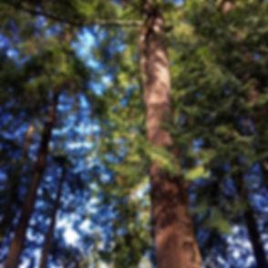Start-Your-Forest-web.jpg