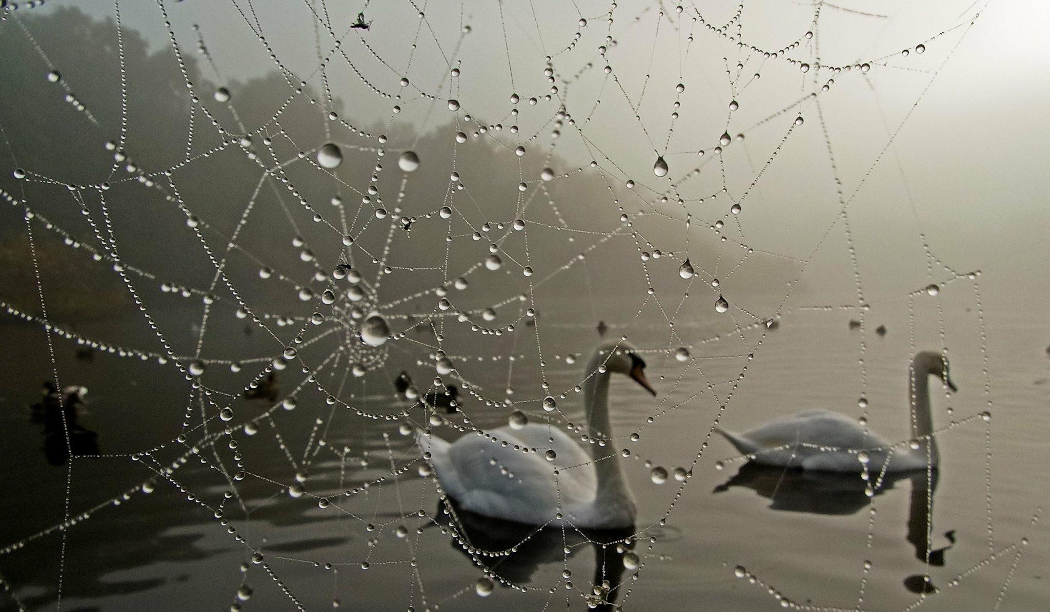 Through the Cobweb