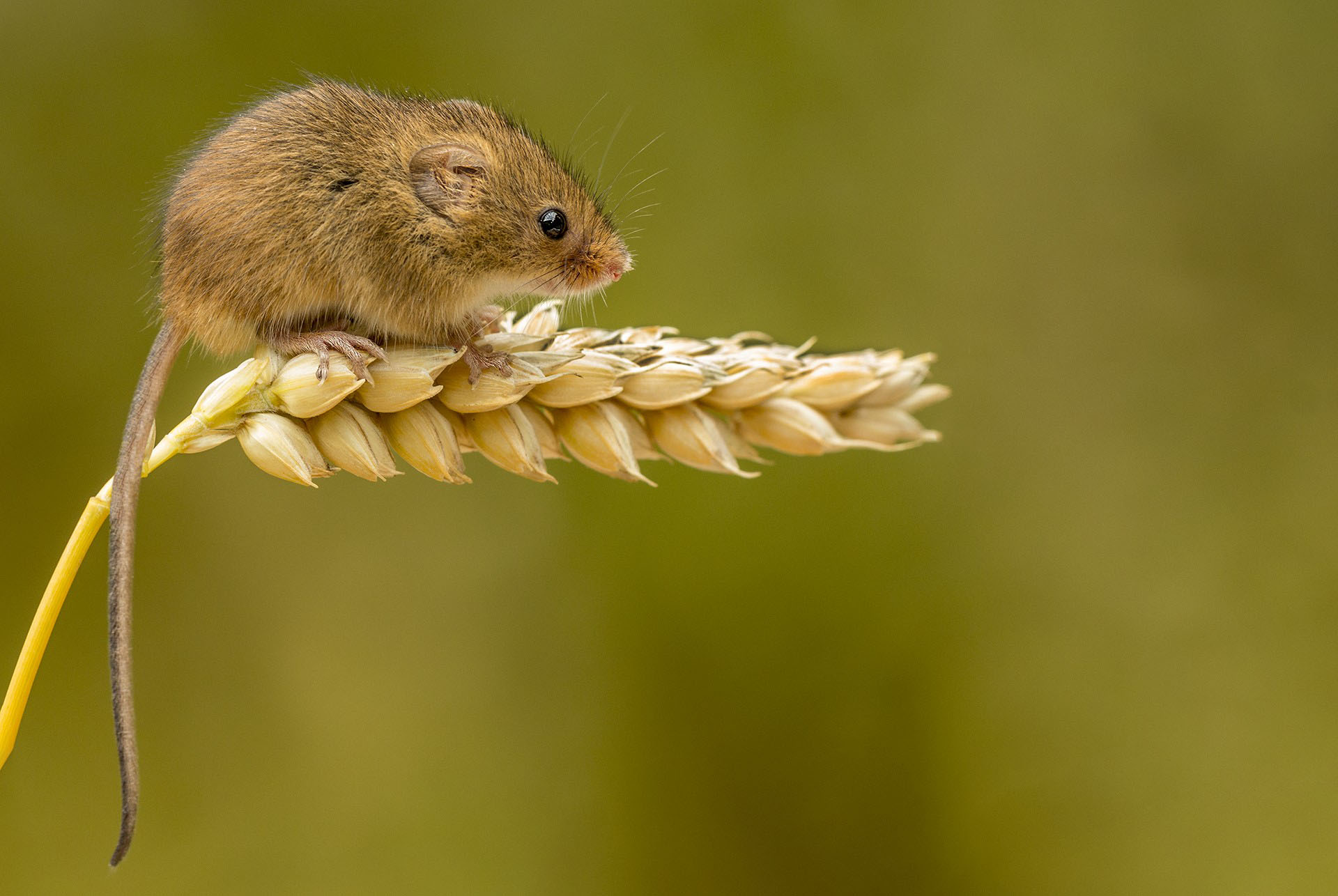 Micro-mouse
