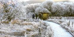 Frosty Meadow