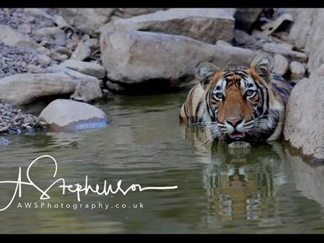 Andy Stephenson Wildlife Photography