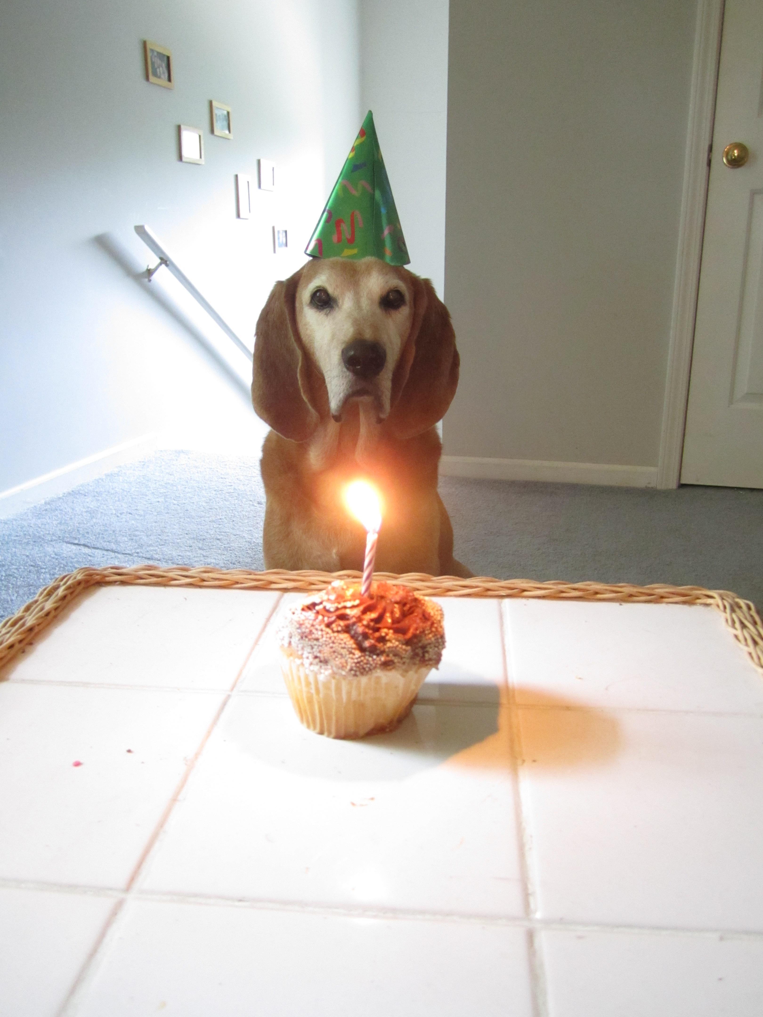 elvy 14th birthday