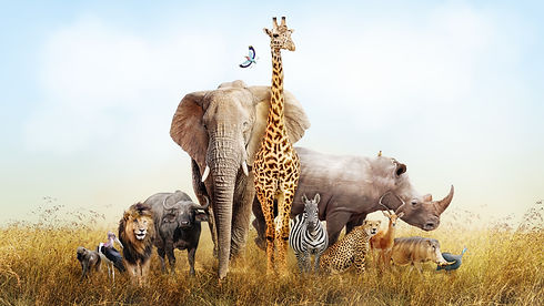 Large group of African safari animals co