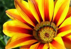7-Tropical_Flower_edited