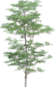 tree_PNG3473.png