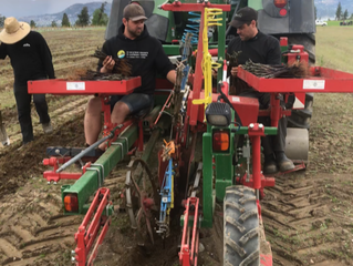 GPS Planting & BC grown potted vines