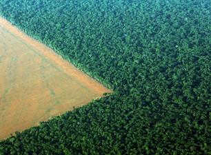 O desmatamento e os negócios
