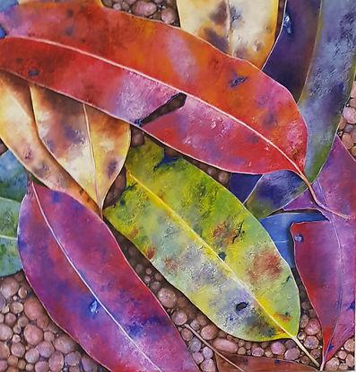 Debra Betonni Eucalyptus Rainbow.jpg