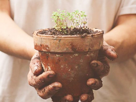 14 - O Senhor é quem proporciona o crescimento de todas as coisas