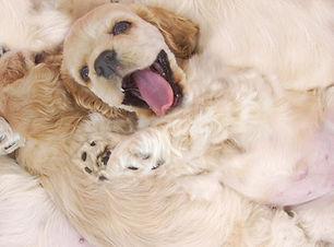 Glückliche Pup