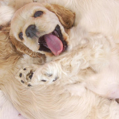 Princess Puppy!