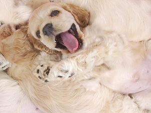 Pup heureux