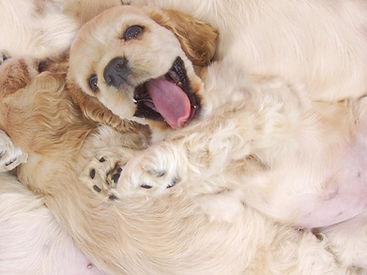 Happy Pup