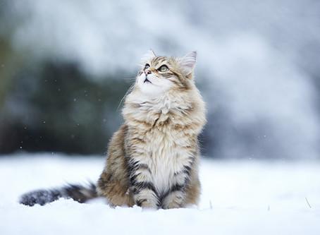 .....Какой пушистый снег! Вы заметили?!