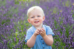 Lavender mini family photography