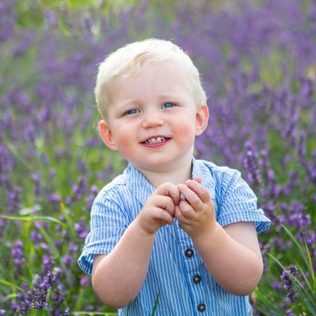 Lavender Mini-sessions