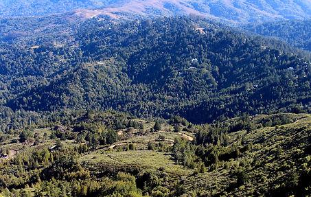 Forest, California, by Yulia Dotsenko.