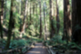 Muir Woods, California, by Yulia Dotsenko.