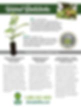 Walnut Rootstock Flyer 6-27-19.jpg