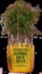 pistachio-16.png