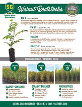 Walnut Rootstock Flyer 2020.jpg