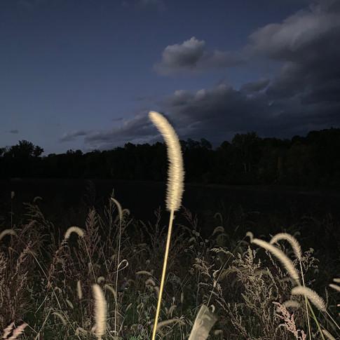 dusk farm.jpg