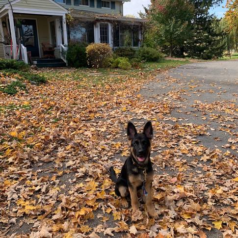 Pata Leaves.jpg