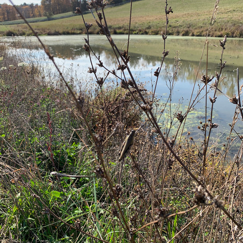 view of pond.jpg