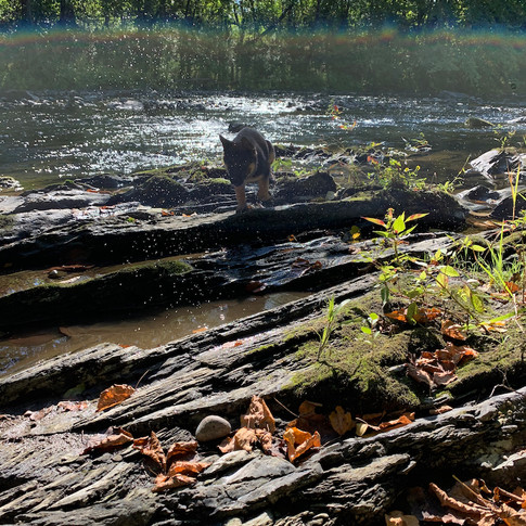 Pata in Creek.jpg