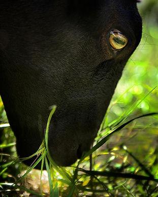 grazing-large.jpg