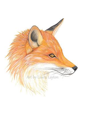 Red Fox - Art Print