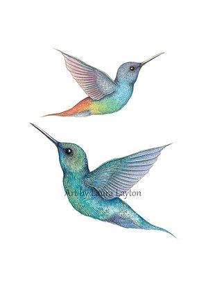 Hummingbirds - Art Print