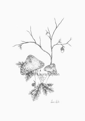 Toadstools - Art Print