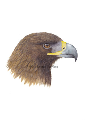 Golden Eagle - Art Print