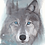 Thumbnail: Blue Wolf - Art Print