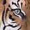 Thumbnail: Tiger