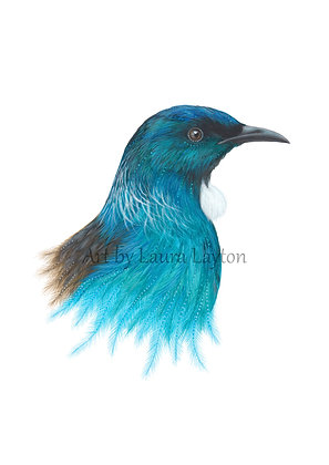 Tui in Blue - Art Print